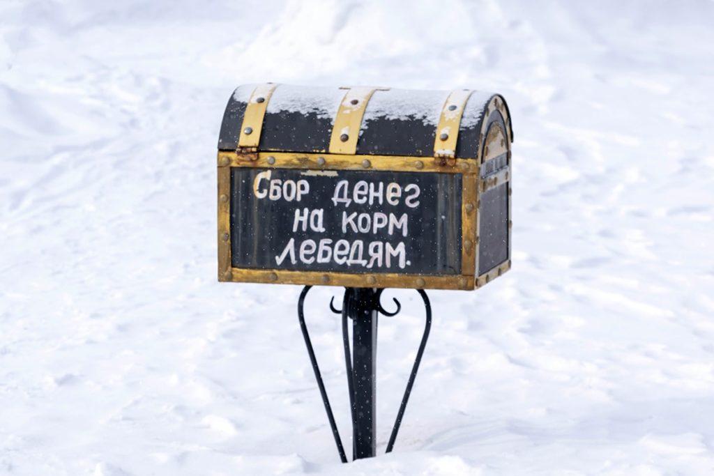 Достопримечательности Бийска - Лебеди кликуны на Бие. Фото: Татаркин В. В.